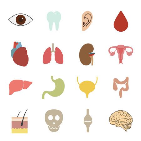 human organs icon Ilustracja