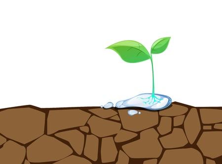 wasteland: plant grow on crack dirt Illustration