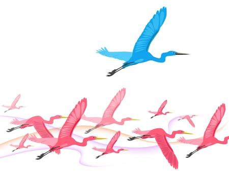 oiseau mouche: mouche oiseau au-dessus des autres oiseaux
