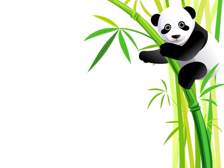 young panda hang on green bamboo forest Vector