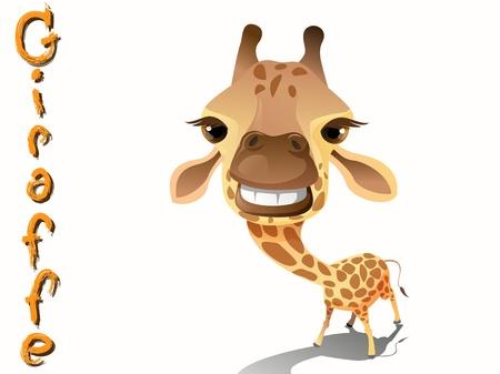 jirafa caricatura: jirafa de dibujos animados lindo de pie sobre fondo blanco Vectores