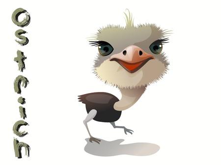 cute ostrich cartoon vactor standing on white background Illustration