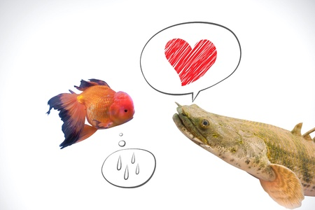 two different kind of fish fall in love, heart photo
