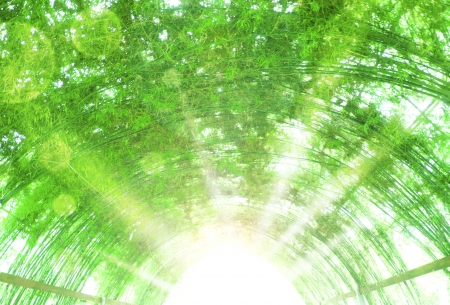 shining light: tunnel made with bamboo,shining light