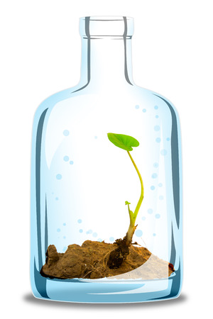 baby plant grow inside glass of bottle ,environmental concept