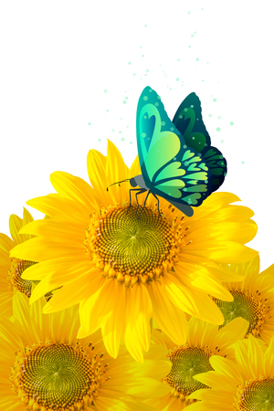 butterfly on sunflower isolated on white photo