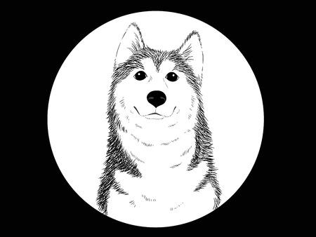 ilustration vector style of Siberian husky dog photo