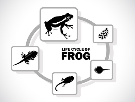 image graphic style of frog life cycle isolated on white background photo