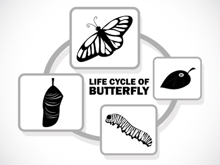 metamorphosis: image graphic style of butterfly life cycle isolated on white background