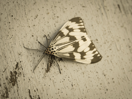 moth on wood background close up