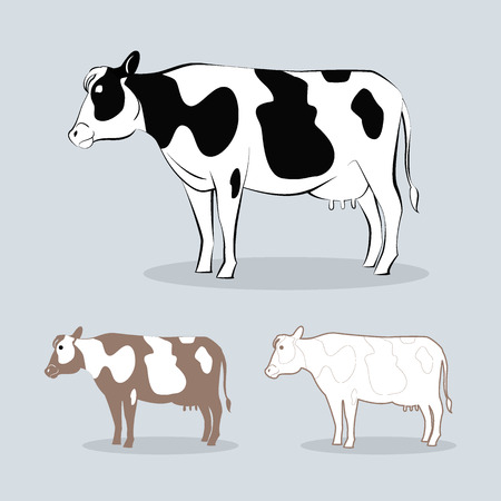 bull cartoon: image graphic style of cow  isolated on white background Stock Photo