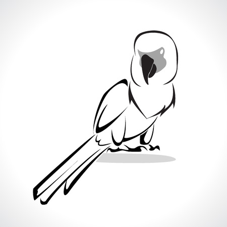 image graphic style of parrot  isolated on white background photo