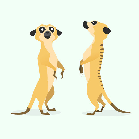 watchful: image graphic style of meerkat  isolated on white background