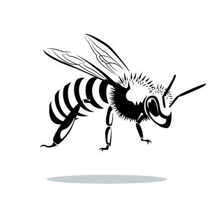 queen bee: image graphic style of bee  isolated on white background