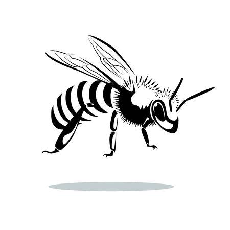 queen bee: Imagen del estilo gr�fico de abeja aislado en el fondo blanco Foto de archivo
