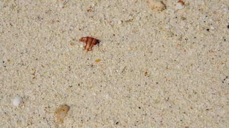 texture of nature sea shell pattern on a sand beach background Stock Photo