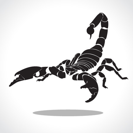 cliche: image graphic style of scorpion  isolated on white background