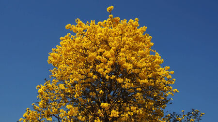 sky bachground: colorful flowers bloom on tree with blue sky bachground
