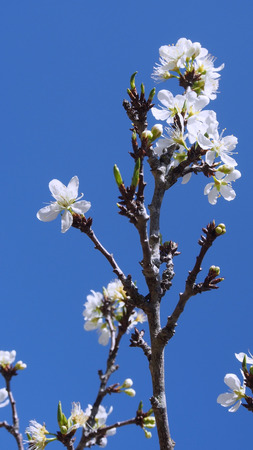 colorful flowers bloom on tree with blue sky bachground
