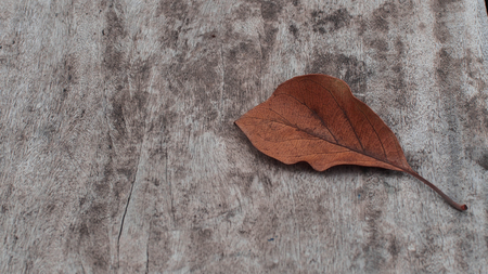 dry leaf: dry  leaf on rusty wood table background Stock Photo