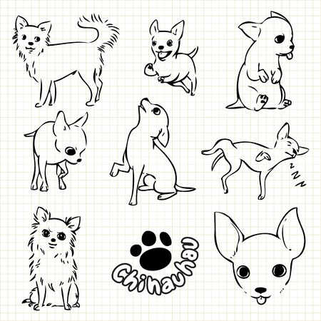 Line drawing  of Chihauhau dog set on grid paper use for elements  design.