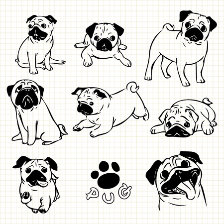 pug dog: Line drawing  of Pug dog set on grid paper use for elements  design. Stock Photo
