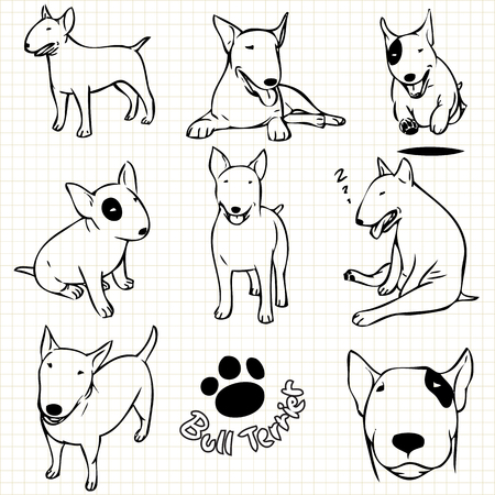 grid paper: Line drawing  of Bull terrier dog set on grid paper use for elements  design.