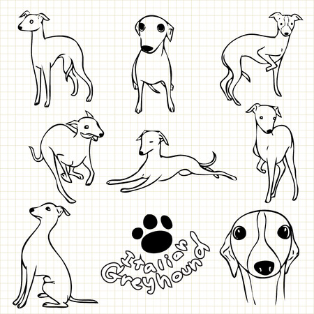 grid paper: Line drawing  of Italian greyhound dog set on grid paper use for elements  design.