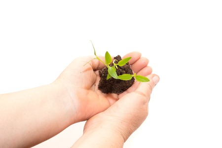 earth handful: Old woman hands holding a green young plant. Symbol of spring and ecology concept Stock Photo