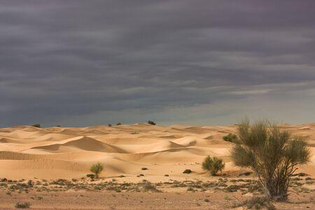 desert storm: Tormenta del desierto