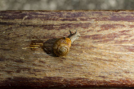 sluggish:  snail crawling on a wooden surface in a park