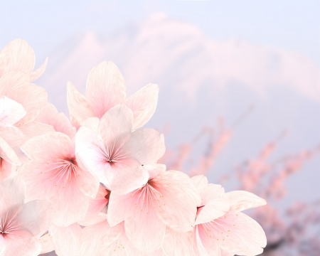 branches of cherry blossoms against the backdrop of Mountain Stock Photo - 20309624