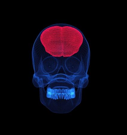 Hhuman brain  under a transparent mesh cover Stock Photo - 20411033