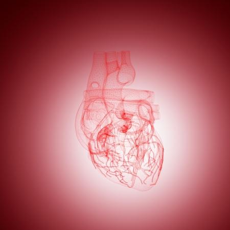 vasos sanguineos: alambre de la anatomía del corazón humano en rojo