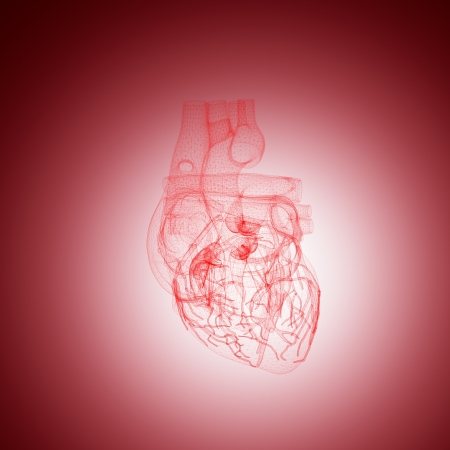 human heart anatomy wire in red