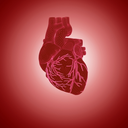 3d rendering of human heart Stock Photo - 20447980