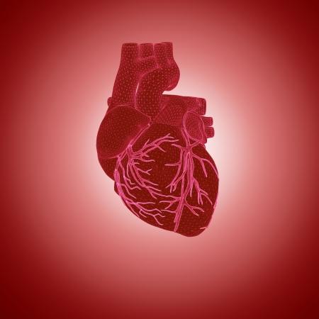 3d rendering of human heart