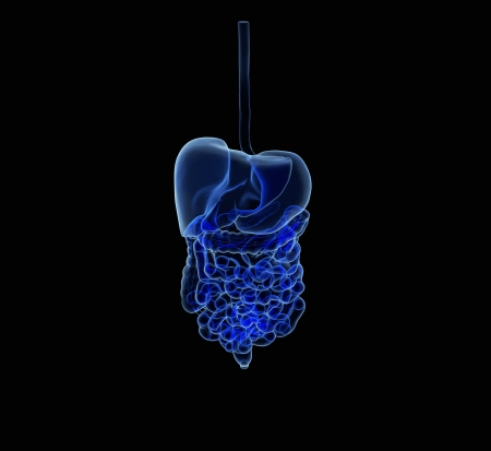 hepatic: 3d rendered illustration of the human digestive system isolated on black