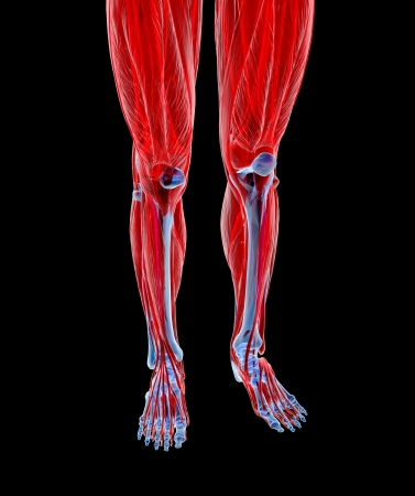 Human feet under X-rays isolated on black.  Stock Photo - 20929291