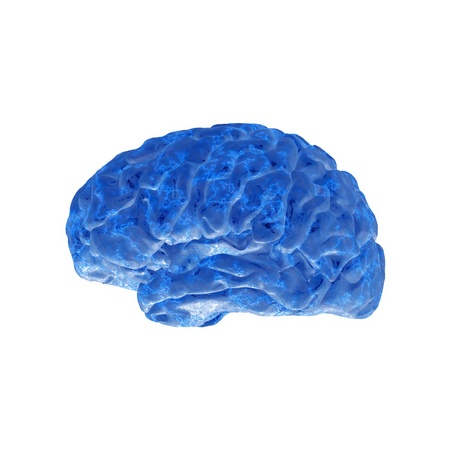 Brain model xray look isolated on white background  photo