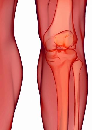 Human knee anatomy with femur, tibia and fibula bones under X-rays isolated on white photo