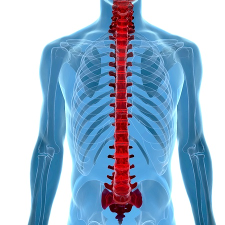 human body under X-rays isolated on white with highlighted  spine