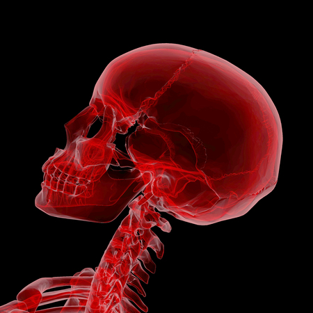Human Skeleton isolated on black with X-ray  effect