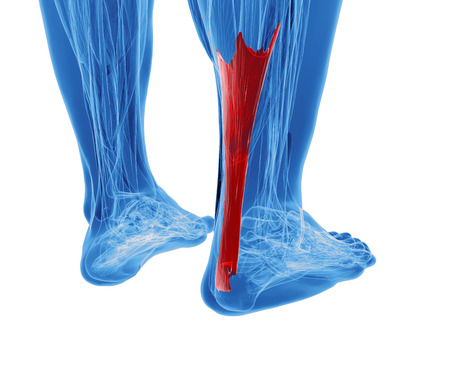 3d rendering of human achilles tendon Фото со стока