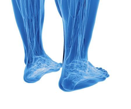Human feet under X-rays isolated on white photo