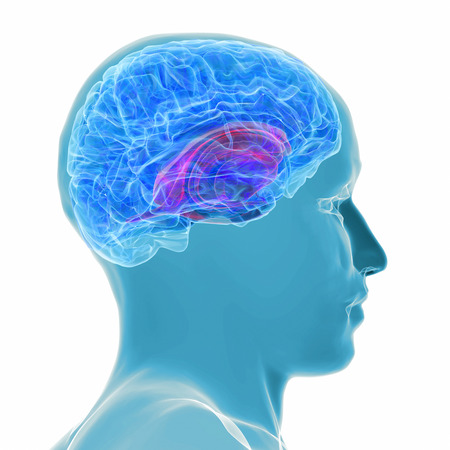 imaging: 3d rendered illustration - active brain Stock Photo