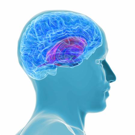 3d teruggegeven illustratie - actieve hersenen Stockfoto