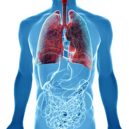 transparent system: human body under X-rays isolated on white with highlighted  lung cancer