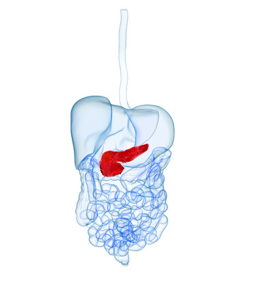 3d rendered illustration of the human digestive system with highlighted pancreas Stock Photo