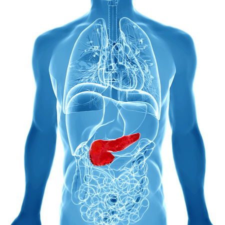 3d illustration with highlighted pancreas